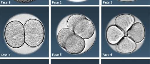 20 perguntas sobre celulas tronco