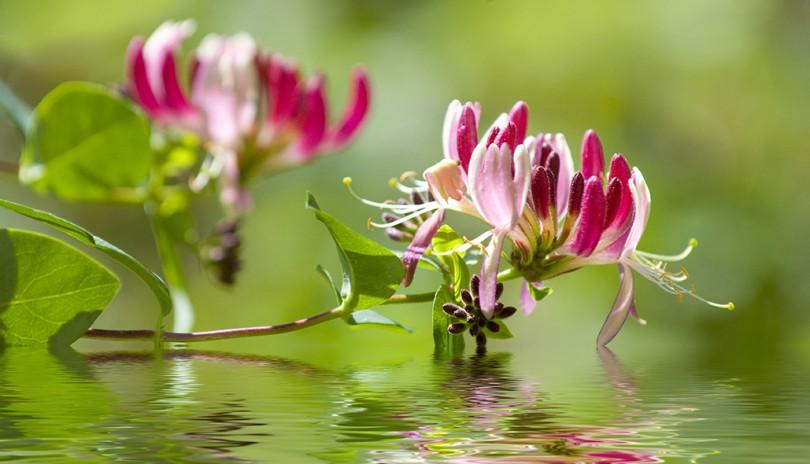 Curso Completo de Florais de Bach